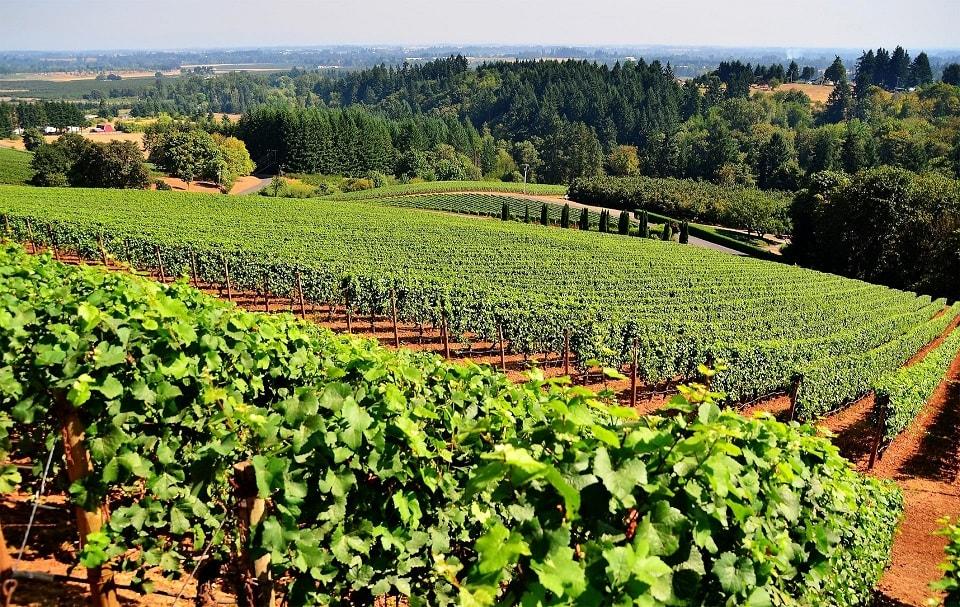 A ACIBEV é membro fundador do Fórum Nacional de Álcool e Saúde e Coordenadora Nacional do programa Wine in Moderation